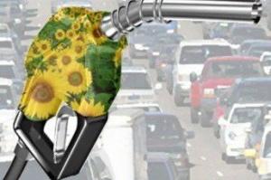 Experiencias de una tesis: las plantas del biocombustible