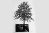 75 años-75 artistas: La ruptura con la naturaleza