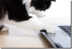 Cat uses a laptop