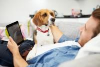 Tecnología para animales