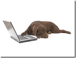 dog-using-laptop-dog-backgrounds-dogs