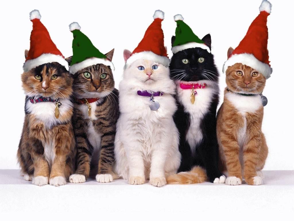 5-cute-cat-celebrating-christmas