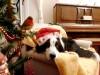 ¿Como sobrevivir la Navidad si no te gusta?