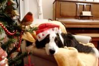 ¿Cómo sobrevivir la Navidad si no te gusta?